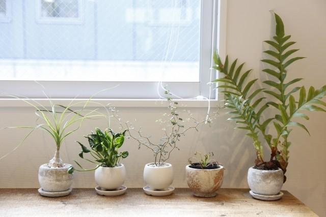 インテリア観葉植物