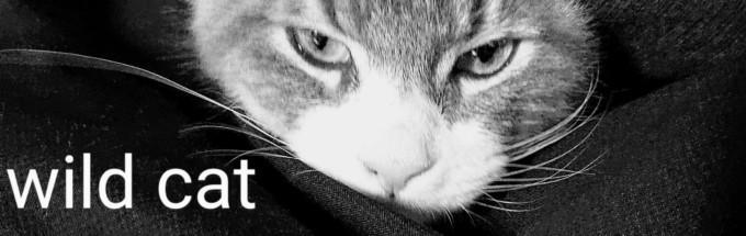 子猫新居ボロボロ