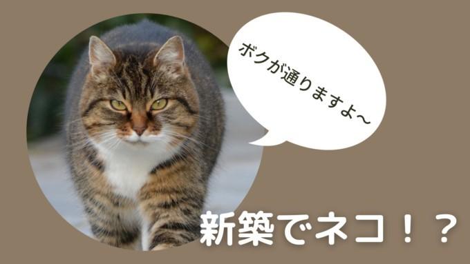 新築で猫を飼ったらボロボロに